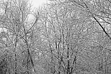 Snow on Branches-Christine Brandel